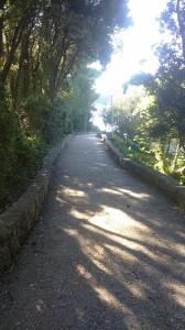 Glavna pot proti plazi